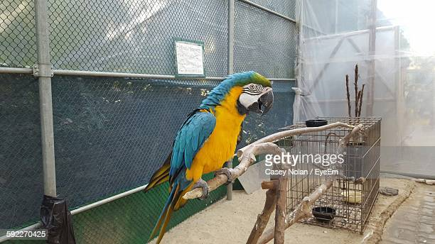 gold and blue macaw perching on branch in zoo - casey nolan stock pictures, royalty-free photos & images