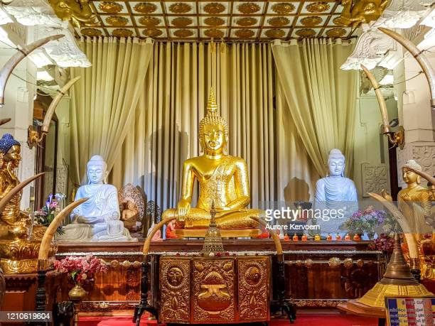 gold buddha statue at the temple of the tooth relic in kandy, sri lanka - kandy kandy district sri lanka stock pictures, royalty-free photos & images