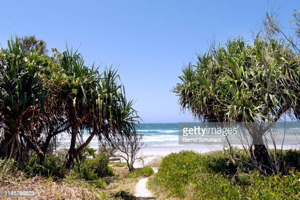gold coast, australia - bernd schunack stock pictures, royalty-free photos & images