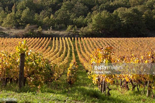 Gold Coast - Burgundy - France