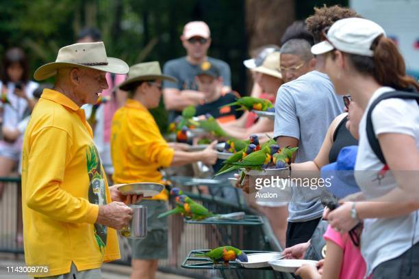 Gold Coast People feeding Native Australian Rainbow Lorikeet from a feeding plate in Queensland, Australia.