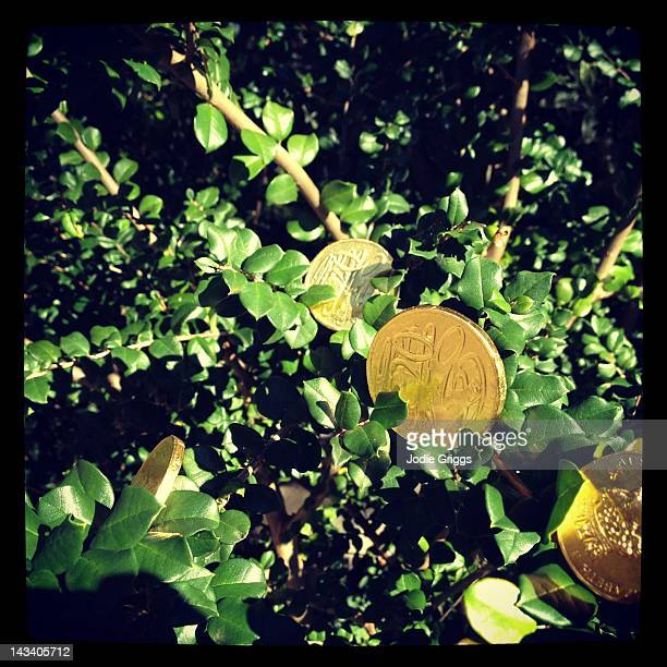Gold coin growing on tree