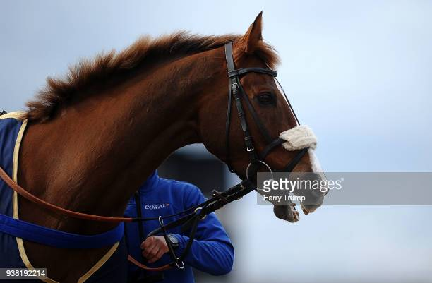 Gold Cup winning horse Native River is paraded in between races at Taunton Racecourse on March 26 2018 in Taunton England