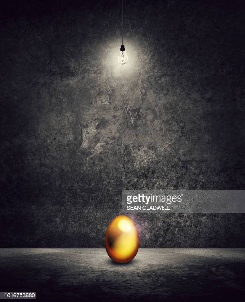 gold egg under light bulb - bank account stock pictures, royalty-free photos & images