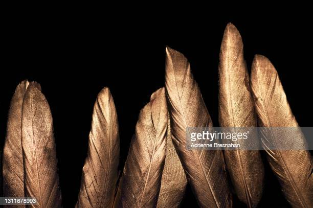 gold feathers - gold coloured stock pictures, royalty-free photos & images