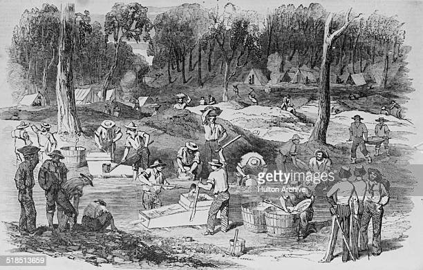 Gold mining operations at Forest Creek on the Mount Alexander Goldfield near Port Phillip during the Australian gold rush Victoria Australia circa...