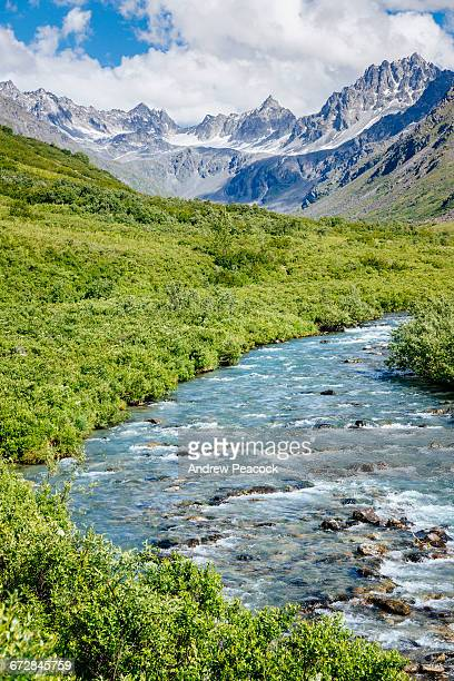 gold mint trail along little susitna river - mt. susitna stock pictures, royalty-free photos & images