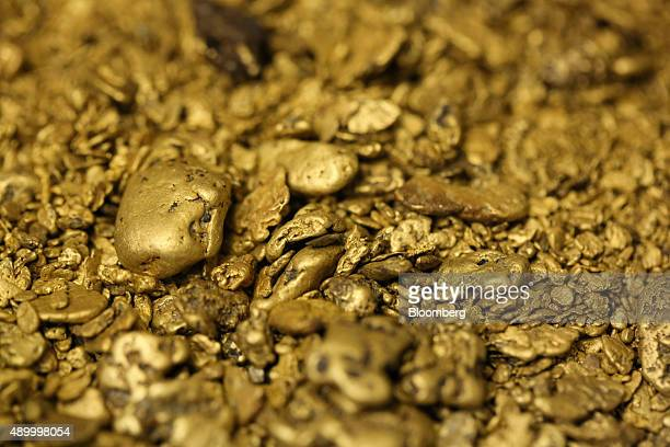 Gold nuggets from placer mining operations sit during sorting at the Lenzoloto OJSC plant a unit of Polyus Gold International Ltd near Bodaybo Russia...