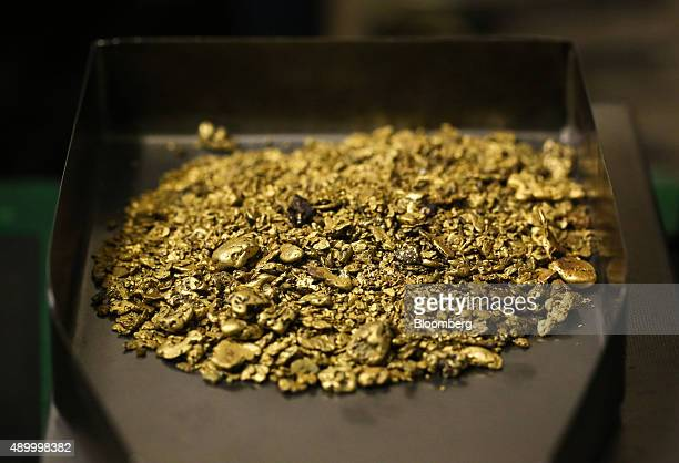 Gold nuggets from placer mining operations sit in a sorting tray at the Lenzoloto OJSC plant a unit of Polyus Gold International Ltd near Bodaybo...