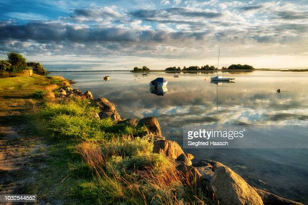 gold - fehmarn stock pictures, royalty-free photos & images