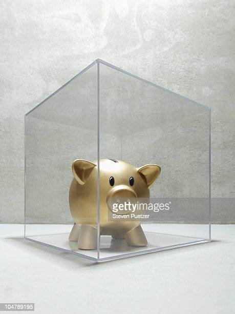 Gold piggy bank enclosed in plastic box