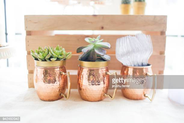Gold Potted Succulents.