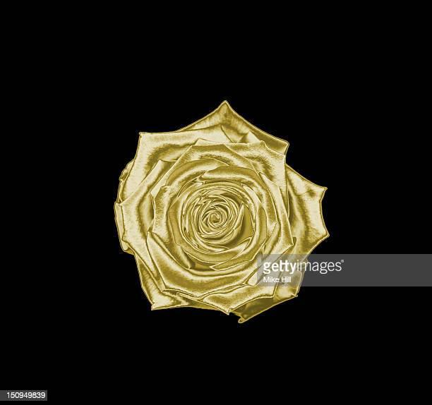 Gold rose on a black background