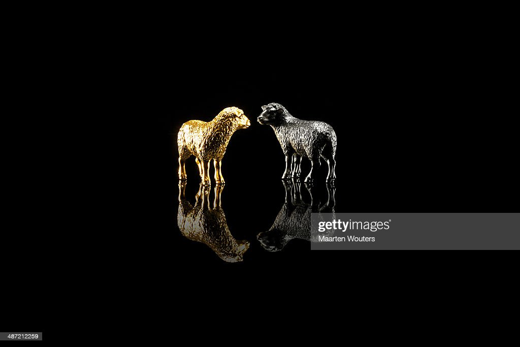 gold saying sheep : Foto de stock