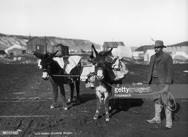 Gold seekers in Goldfield Nevada with two mules laden with equipment Goldfield Nevada USA date unknown