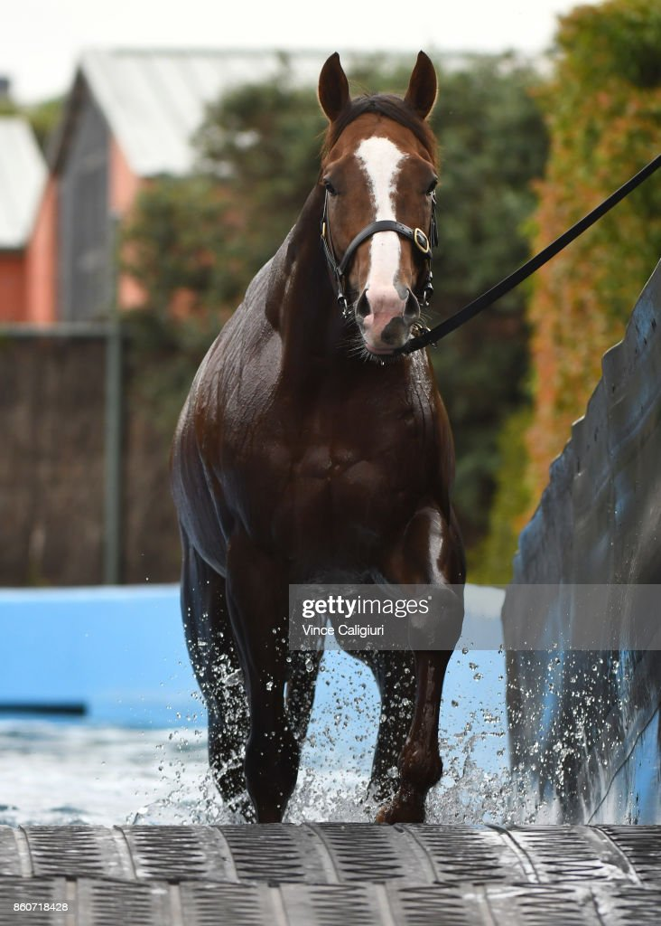 Gold Standard from the Gai Waterhouse stable is taken for a swim during a Trackwork Session at Flemington Racecourse on October 13, 2017 in Melbourne, Australia. Gold Standard will contest tomorrows Group One Caulfield Guineas.