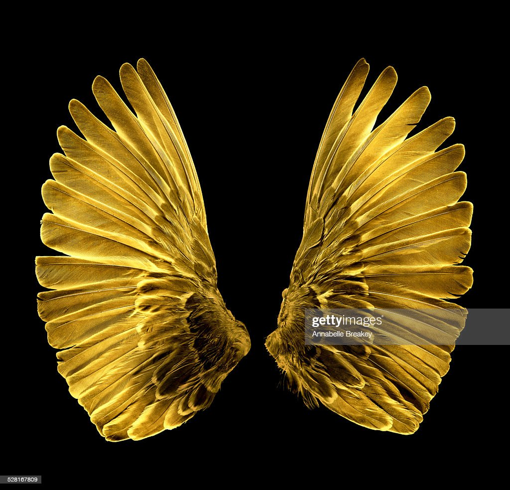 Gold Wings : Stock Photo