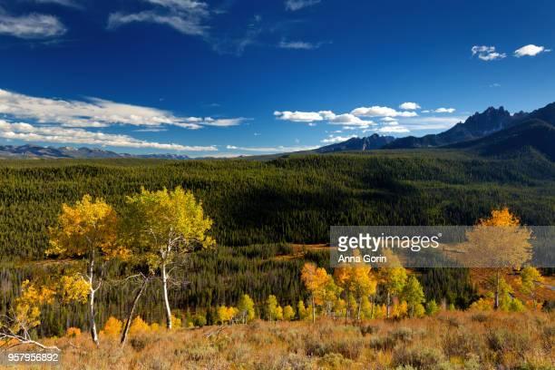 Golden aspens on hillside in Sawtooth Mountains, Stanley, Idaho, autumn evening