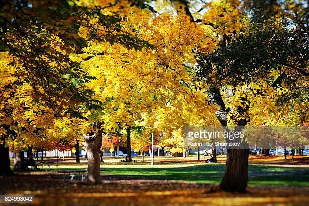 Golden Autumn in a Park