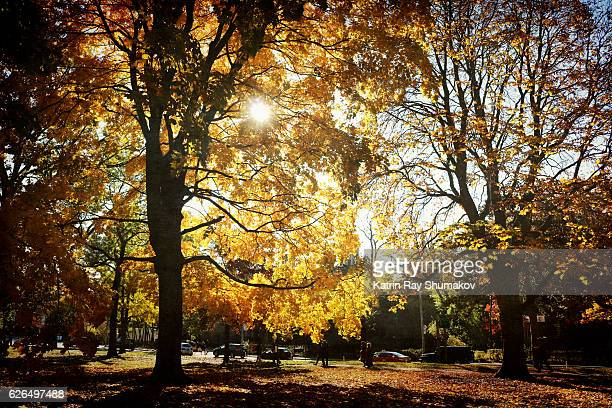 Golden Autumn in Queen's Park