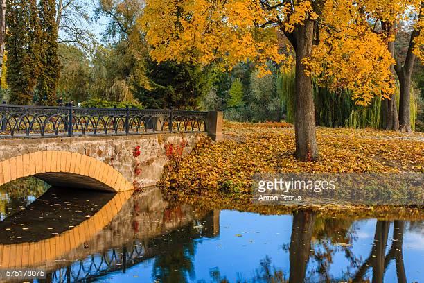 golden autumn park with a beautiful bridge - anton petrus stock pictures, royalty-free photos & images