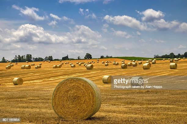 Golden bales of straw