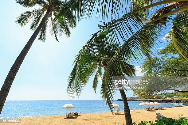 Golden beach and palm trees at Hulopoe Beach Park, Lanai Island, Hawaii, USA