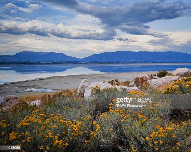 golden beauties - great salt lake stock pictures, royalty-free photos & images