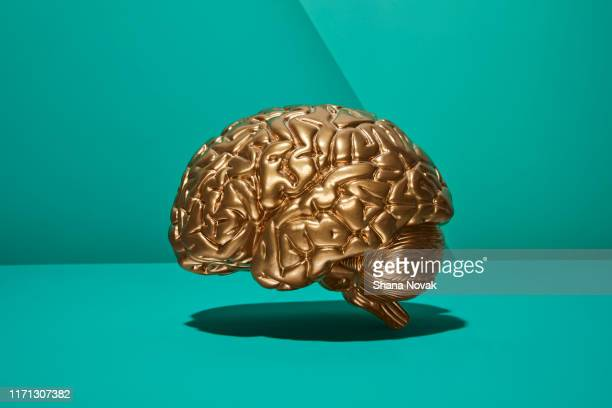 golden brain - wisdom stock pictures, royalty-free photos & images