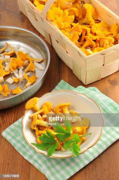 golden chanterelle mushroom (Cantharellus cibarius) in frying pan