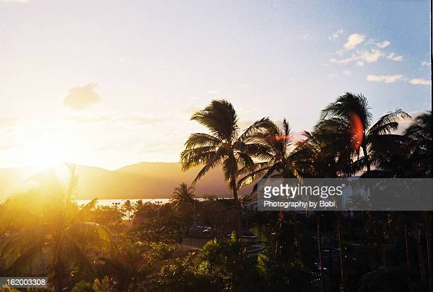 Golden coconut grove sunset in Cairns, Australia