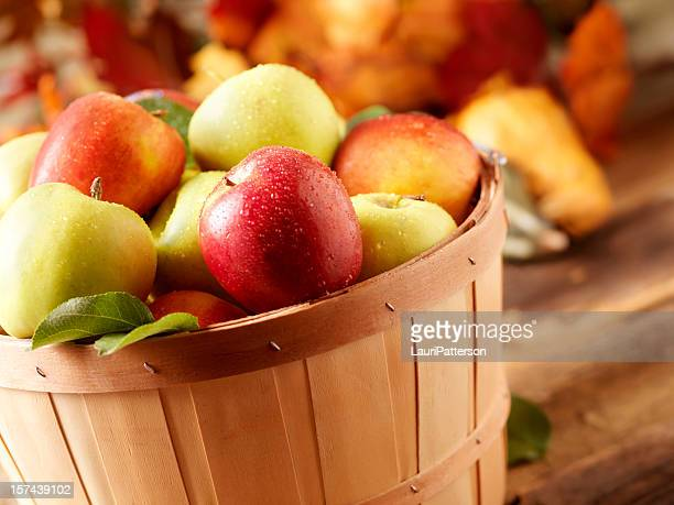 Golden Delicious and jazz apples at Harvest