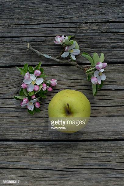Golden Delicous apple and blossoms on wood