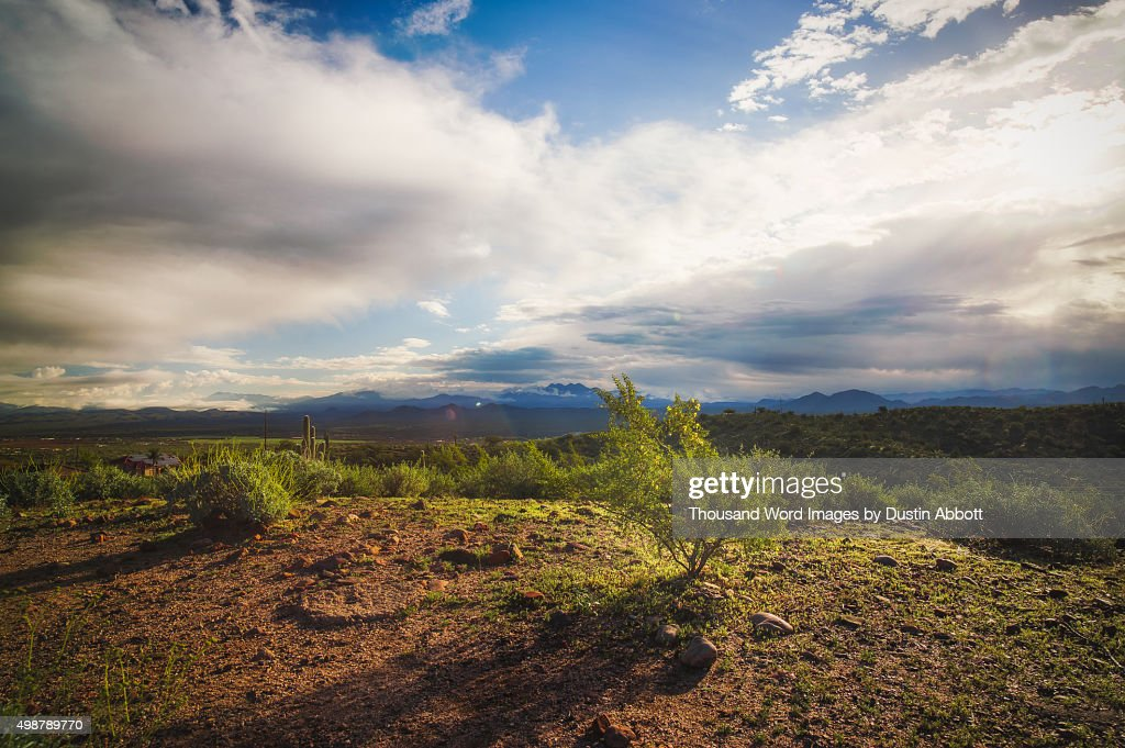 Golden Desert Light : Stock Photo