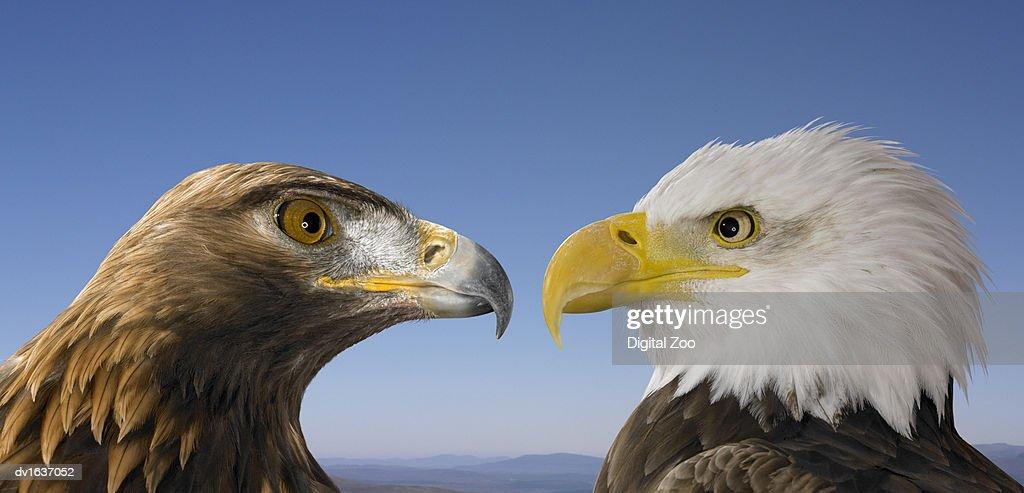 how to make a bald eagle