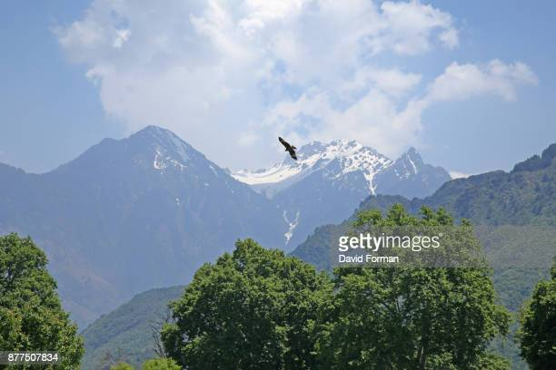 a golden eagle flies above the hills surrounding dal lake in srinigar, kashmir. - aguila real fotografías e imágenes de stock