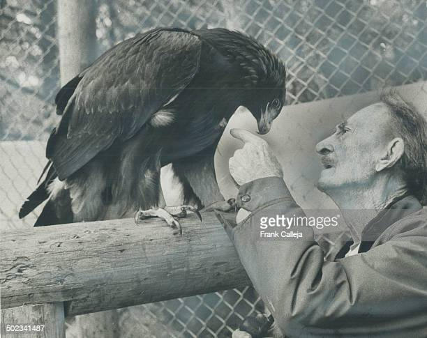 Golden Eagle thanks its benefactor; Raja; a golden eagle; leans over 92-year-old Roy Ivor; the naturalist with a bird sancturary on Mississauga Rd....