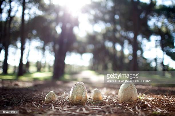 Golden Easter Eggs nest in the forest