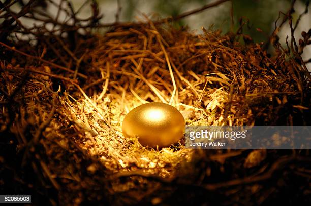 golden egg in nest - bird's nest stock pictures, royalty-free photos & images