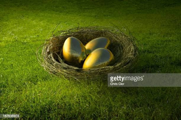 Golden eggs in bird's nest