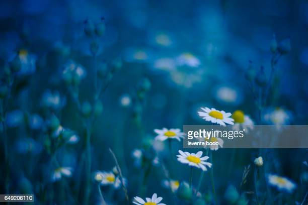Golden evening summer flowers on the summer meadow, inspirational natural landscape background concept.
