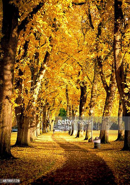 golden fairyland - xuan che stock pictures, royalty-free photos & images