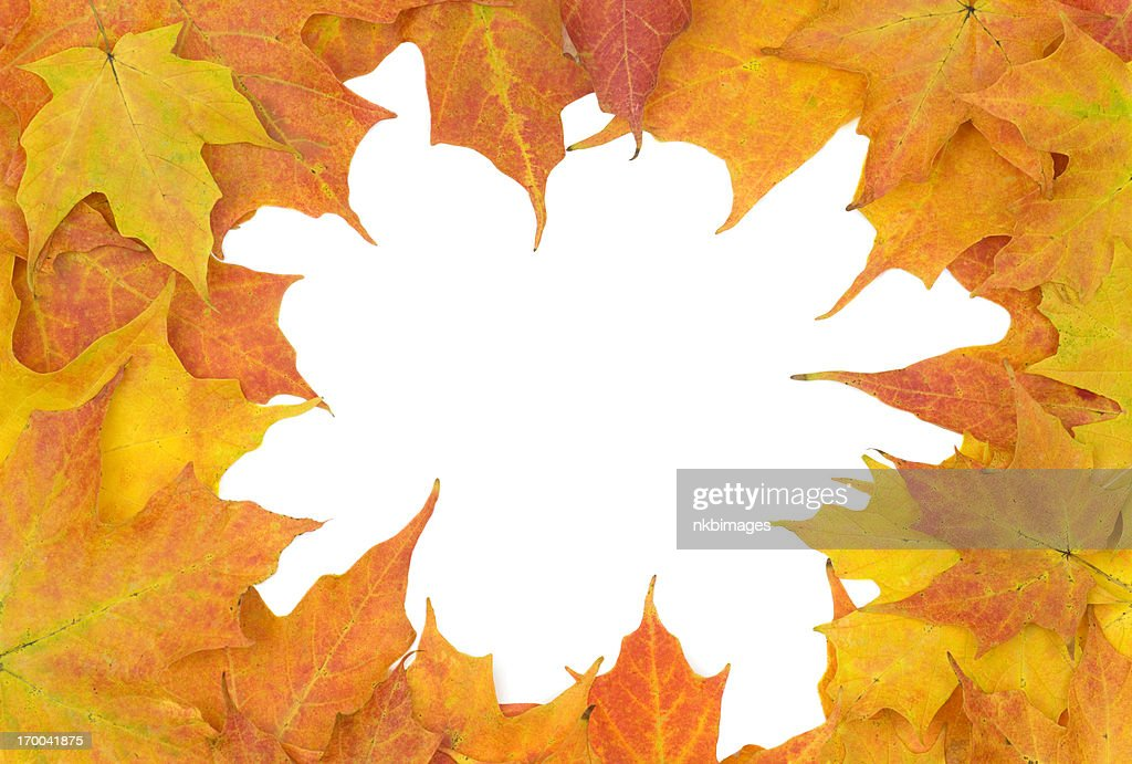 Golden Fall Maple Leaves Frame A White Background Stock Photo ...
