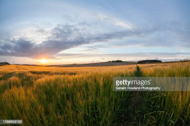 golden farm fields - geraint rowland stock pictures, royalty-free photos & images