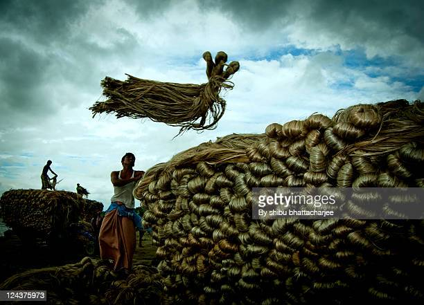 golden fiber flying on blue sky - bangladesh village stock photos and pictures