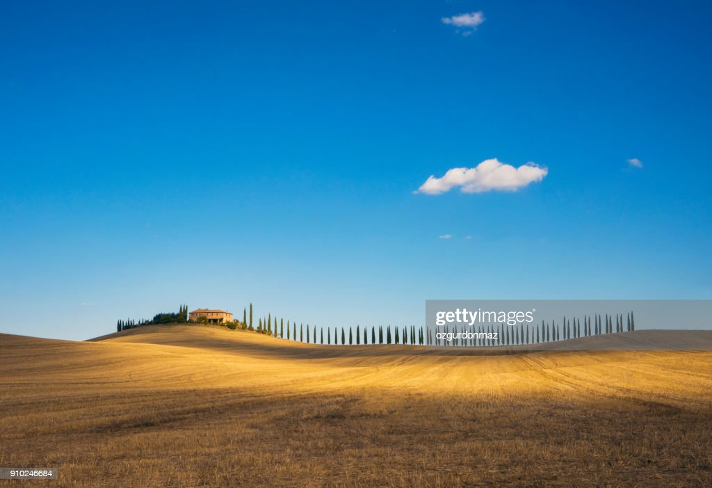 Golden field and alley of cypress in Tuscany, Italy : Foto stock