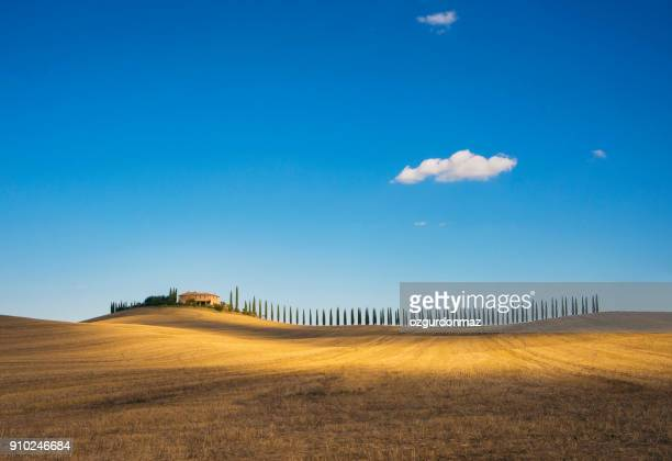 golden field and alley of cypress in tuscany, italy - paesaggio foto e immagini stock