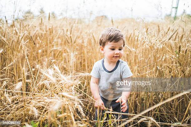 Golden field and the baby