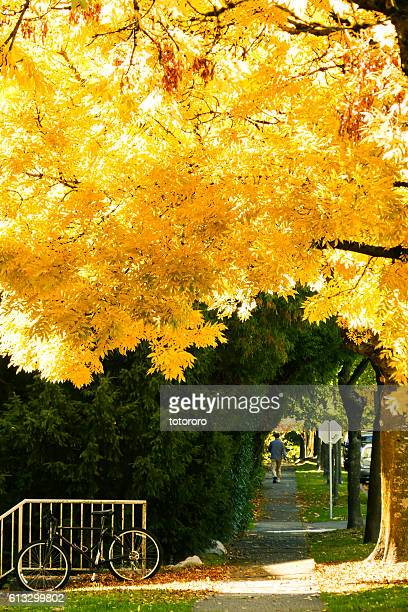 Golden Flame in Autumn in Vancouver BC Canada
