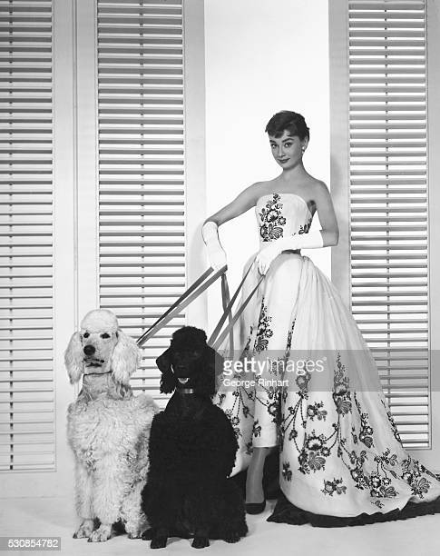 Golden Girl Audrey Hepburn who stars with Humphrey Bogart and William Holden in Paramount's Sabrina is Hollywood's new Golden Girl she rose to...